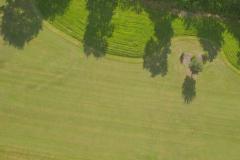 des pins pour border les chemins