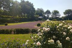 rosiers et géraniums vivaces